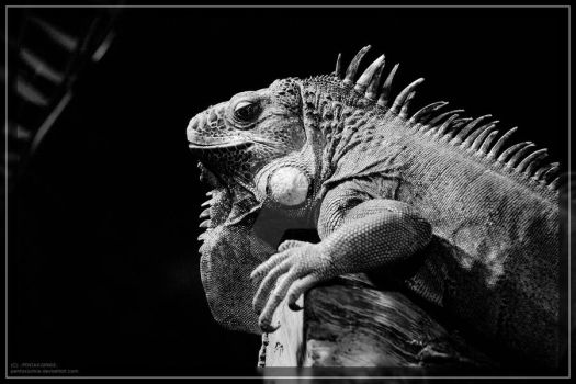 lazy reptile by PENTAXJUNKIE