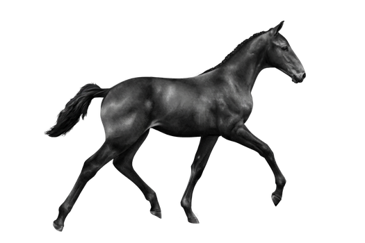 Free to use Foal greyscale by alvija