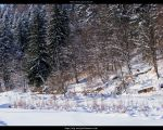 Winter Forest by ALP-Stock
