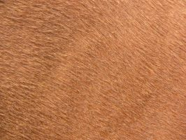 Horse skin Texture 02 stock by FrostBo