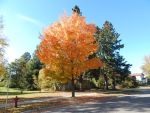 fall color8 by kingbob24