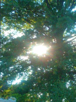 Sunlight and Trees by shelbzzzz