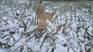 .First snow. by decayedroses