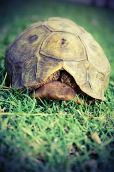 Turtle by LittleRed9188