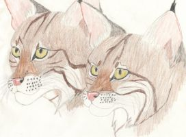 two bobcats by SolitaryGrayWolf