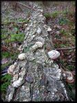 Some Fungi... by Yancis
