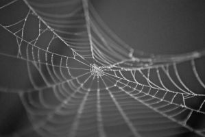 Spider web by flowersteph