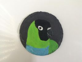 Nanday Conure Coaster by MadalynC