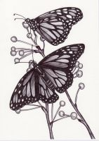 Monarch Butterflies by BeckyHolly