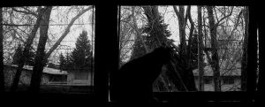Kitty At The Window by missedyn