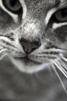 Kitty Nose by saaarahb