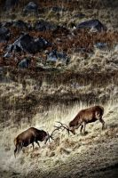 Stags in a Landscape: Galloway by Coigach