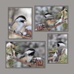Chickadees in Winter by papatheo
