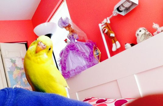 Daisy the budgie by StarlitStables