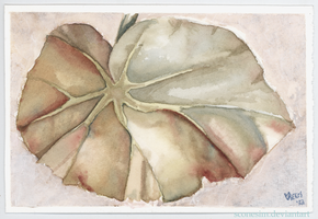 Rex Begonia Leaf by unSpookyLaughter