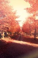 Autumn Signs 4 by AtelierAntares