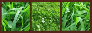 Grass Triptych - Texture Your World Contest by anatglo100