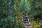 Enchanted Trail with stairs by narisign