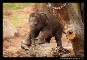 Baby Elephant Gymnastics III by TVD-Photography