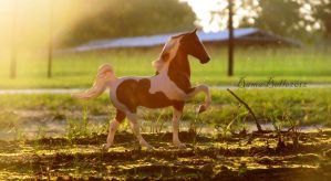 Sprinkle In The Sunset by BamaBelle2012