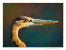 Heron by kootenayphotos