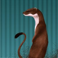 We need more weasel by Smauch