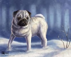Snow pug by Azany