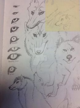 Animal Eye Practice by InstinctbyLaw