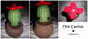 Tiny Knitted Cactus by Stitch-Happy