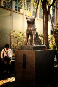 hachiko statue by saxyphone