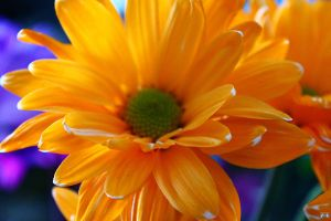 Birthday Flowers 2 by LifeThroughALens84