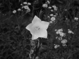 nature black and white by Meinsei