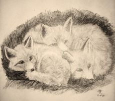 Fox cubs by masterkitsune