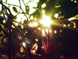 Shine on Me Summer Entry by Morna