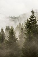 the foggy forest by stachelpferdchen