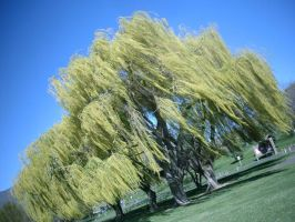 Weeping Willow by Sapphyre83
