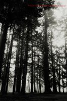 BW trees by AmeenS