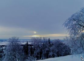 Horizon over cold treetops by wellgraphic