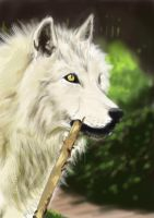 Wolf study by LutherTaylor