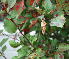 Lone Bagworm. by cerebralsewer