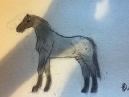 grey appaloosa stallion- Thunder clash by whenwolveshowl