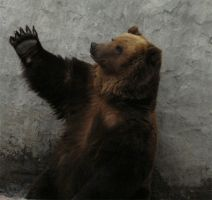 great bear by ver2