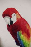macaw by w01fg4ng