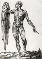 Flayed Anatomy Study by BlackberryClock