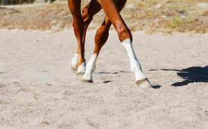 Leg Yield by EquineImages