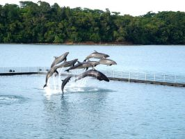 Jumping Dolphins by candybop
