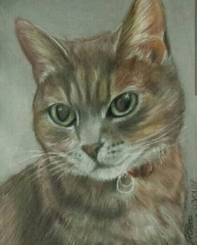 Cat drawing in soft pastel by AltheaWorld
