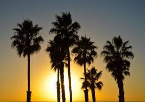 Palms by ShannonCPhotography
