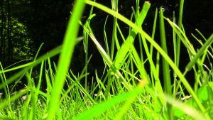 Grass by irgames