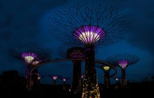 Gardens By The Bay -  20140425 - 00074-00077 by TomFawls
